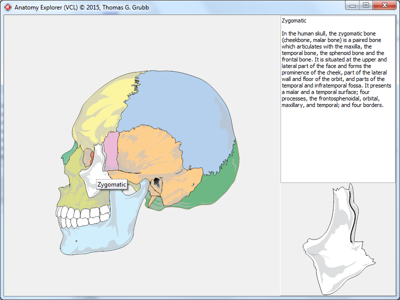 SVG Anatomy Explorer